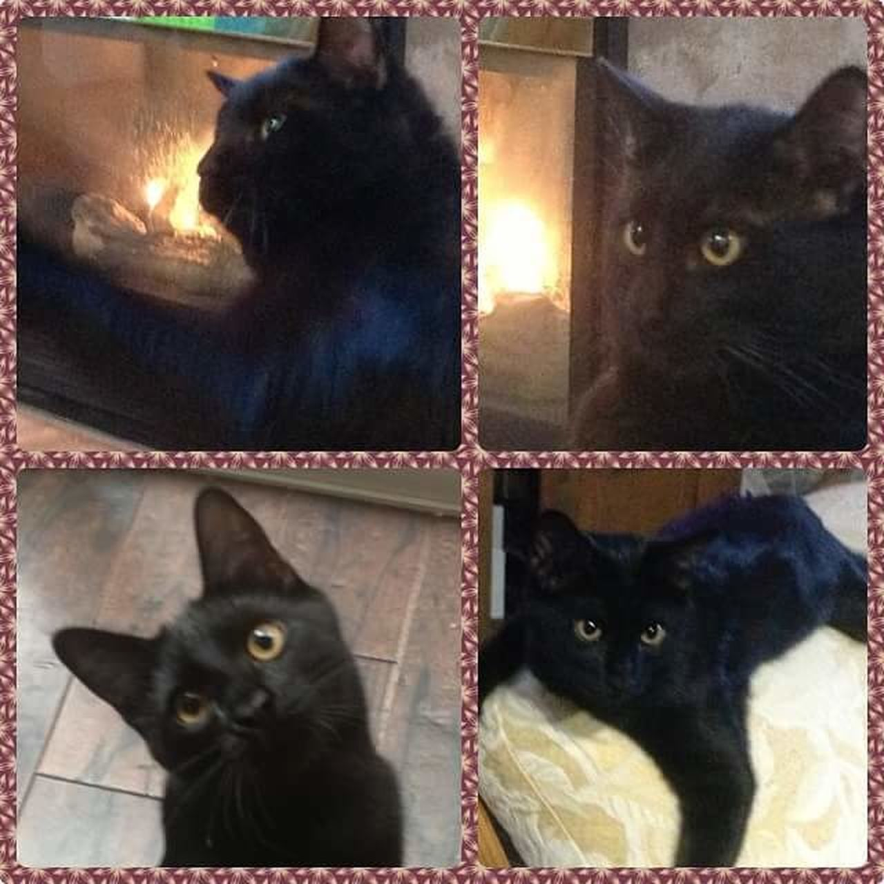 Pets One Animal Domestic Animals Domestic Cat Looking At Camera Animal Portrait No People Animal Themes Mammal Indoors  Dog Feline Close-up Day Black Cats Are Beautiful Indoors  Looking At Camera Postcard Beauty In Nature