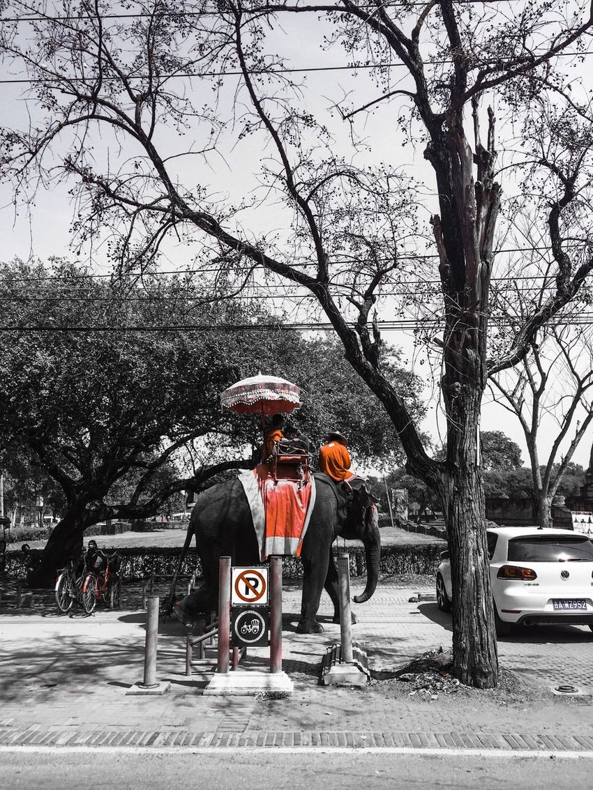 Various modes of transportation in Thailand, I won't take the elephant though🙏 Modeoftransportation Elephant Ride Bicycle Car Ayutthaya Street EyeEm Thailand The Tourist Mission February Showcase EyeEm Taking Photos Holiday Trip February 2016 Thailandtravel Protect Our Wild Life Spotted In Thailand Upclose Street Photography