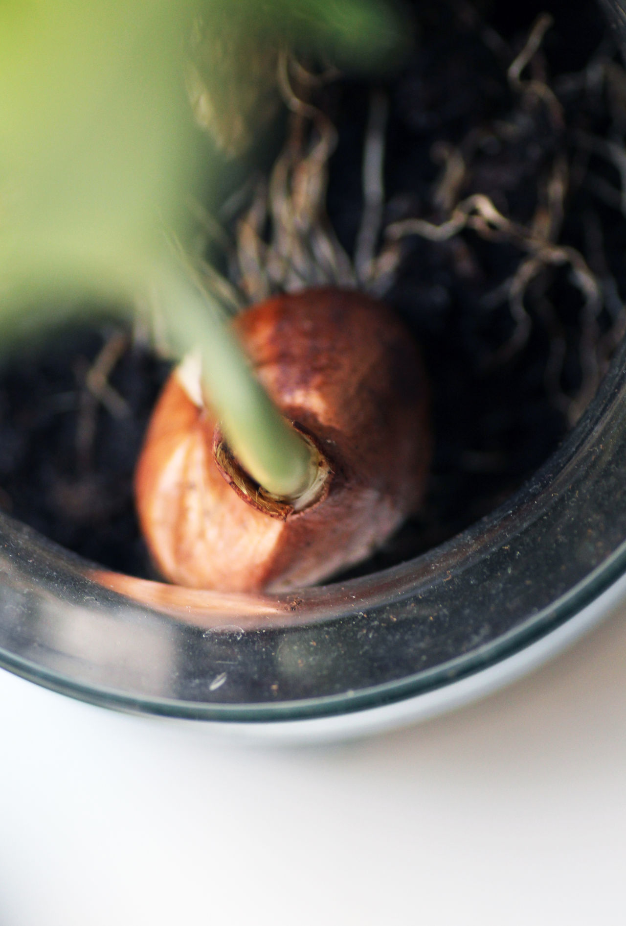 Plant Bird Perspective Bird´s Eye View Brown Close-up Day Earth Fertility Flowers Fruitfulness Garden Green Color Ground Growth Indoors  Jar Leaf Nature Nature Photography Nature_collection Plant Plant Pot Seeds Soil To Plant Something Tulip Onion