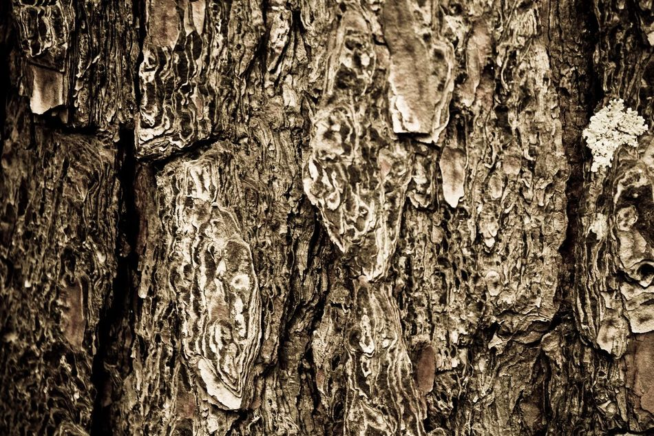 No People Textured  Tree Trunk Backgrounds Close-up Wood - Material Tree