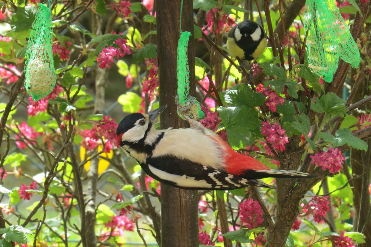 Animal Themes Beauty In Nature Bird Birds In My Garden Day Food Guest On The Aviary Nature No People Outdoors