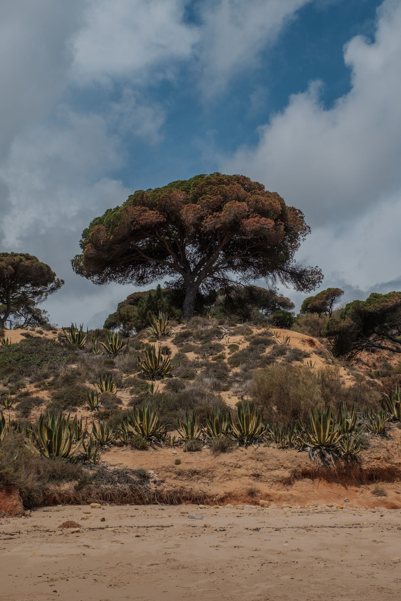 Algarve, Portugal Beauty In Nature Cloud - Sky Day Growth Nature No People Sky Tranquility Travel Destinations Tree