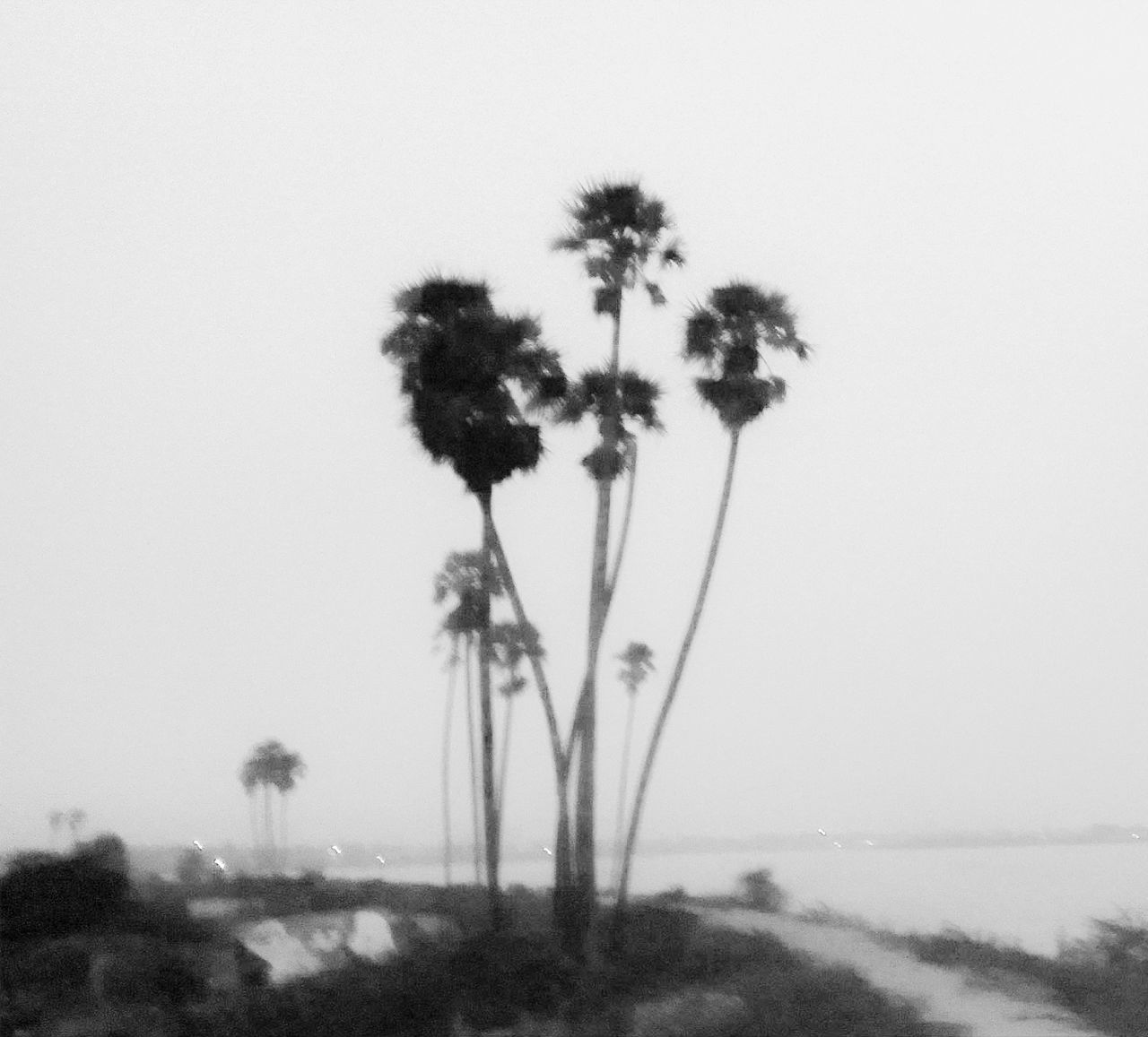 Beach Beauty In Nature Beauty In Nature Blackandwhite Clear Sky Day Dreamy Fine Art Photography Growth Lake Lake View Nature No People Outdoors Palm Tree Scenics Sea Sky Soft The Week Of Eyeem Tranquil Scene Tree Tree Water White
