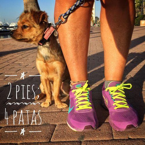 #perros Caminar