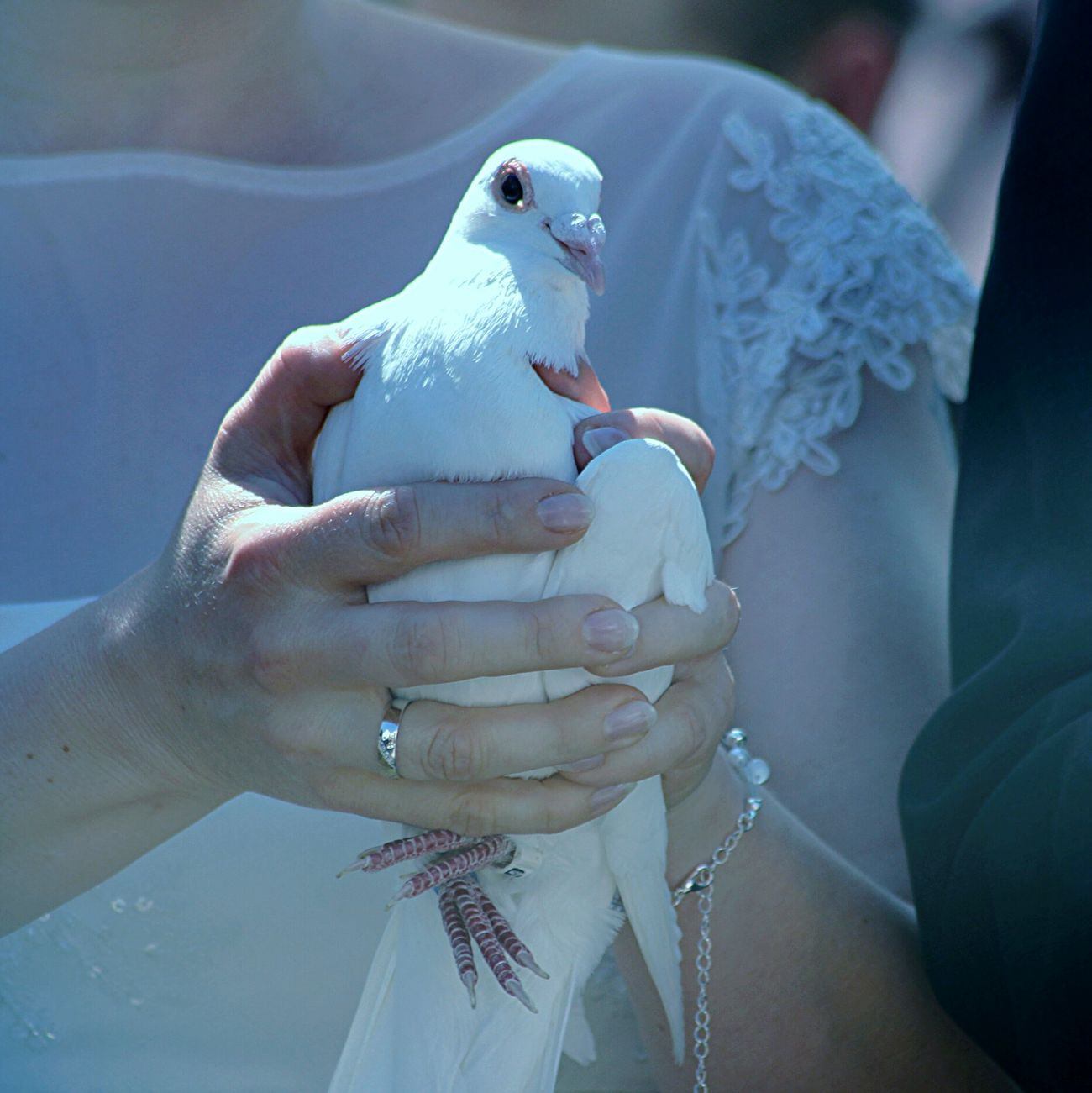 Happiness Hope Love Dove Enjoying Life Beautiful Macro Wedding Day Macro Photography Summer