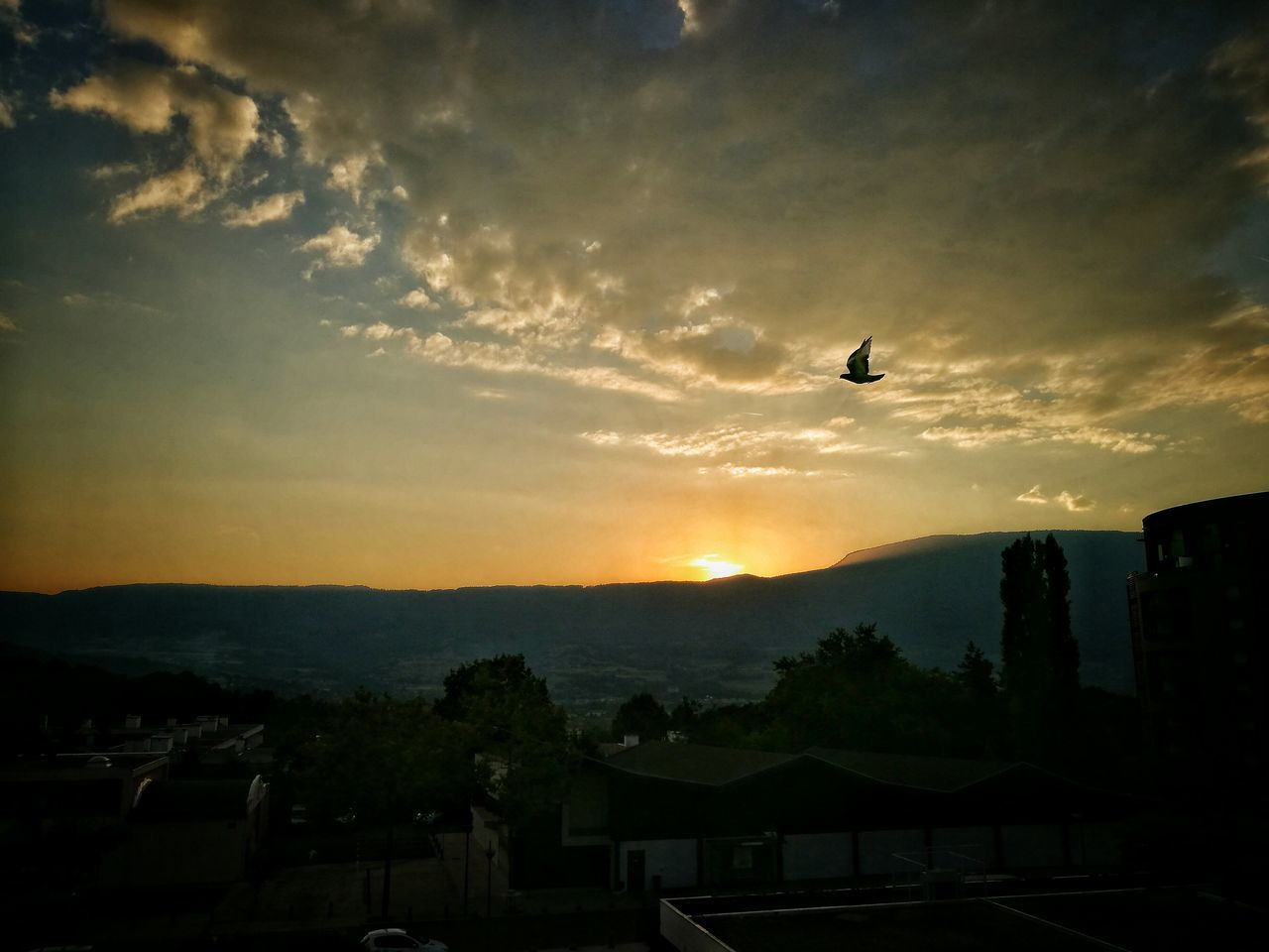 Birds Of EyeEm  Flying Sunset Sky Liberty