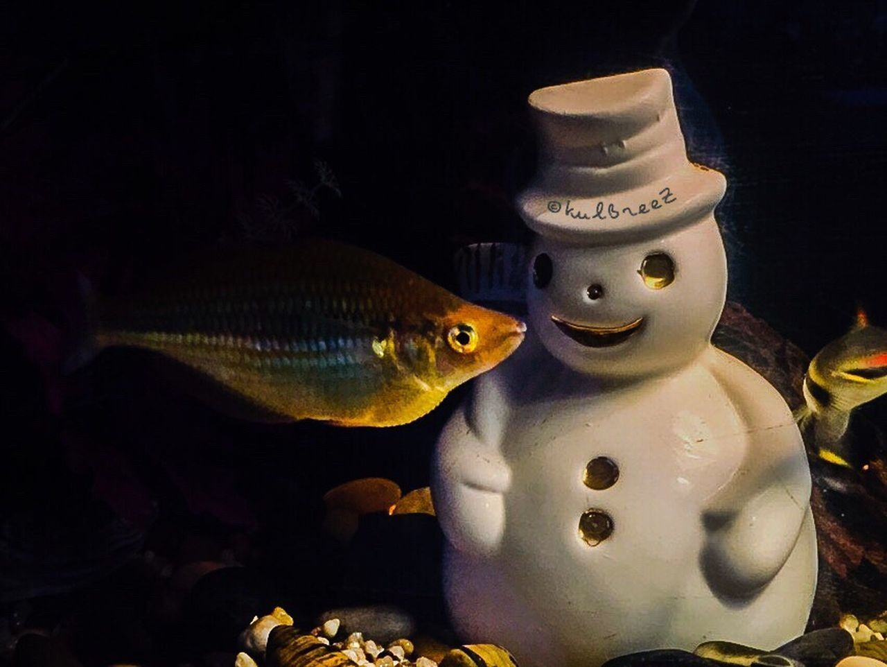 SnowmanChallenge Streamzoofamily EyeEm Nature Lover Fishtank