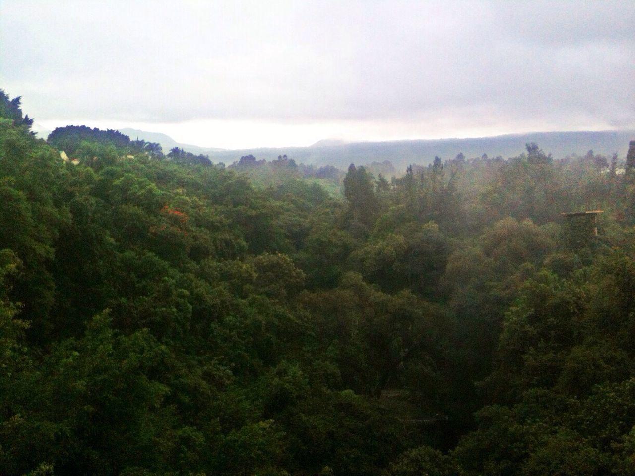 The Calmness Within Horizon Green Nature