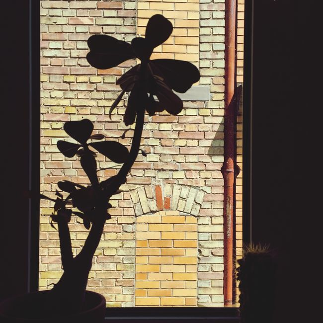 Summertime Window Silhouette Brick Getting Inspired Light And Shadow Darkness And Light