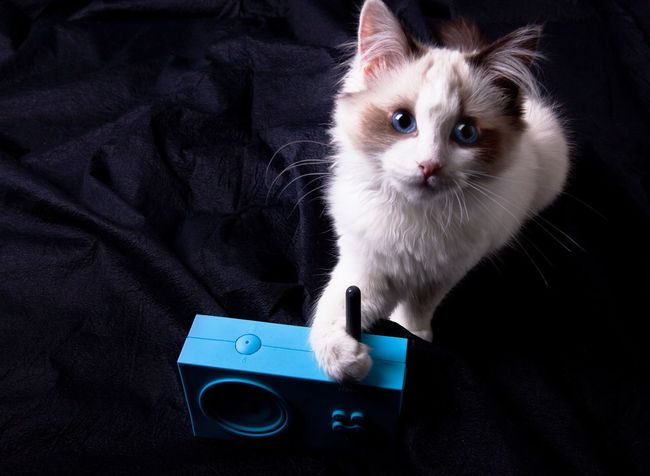 Our cat. Things I Like Cat Kitty Kitty Cat Animal Pets Cute Pets Cute Radio Blue Blue Album