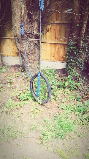 A tyre swing no longer used so i thought I'd share it with you all. The Kids Tyre Swing, Enjoying Life My Garden Eyeem Tyre Shot