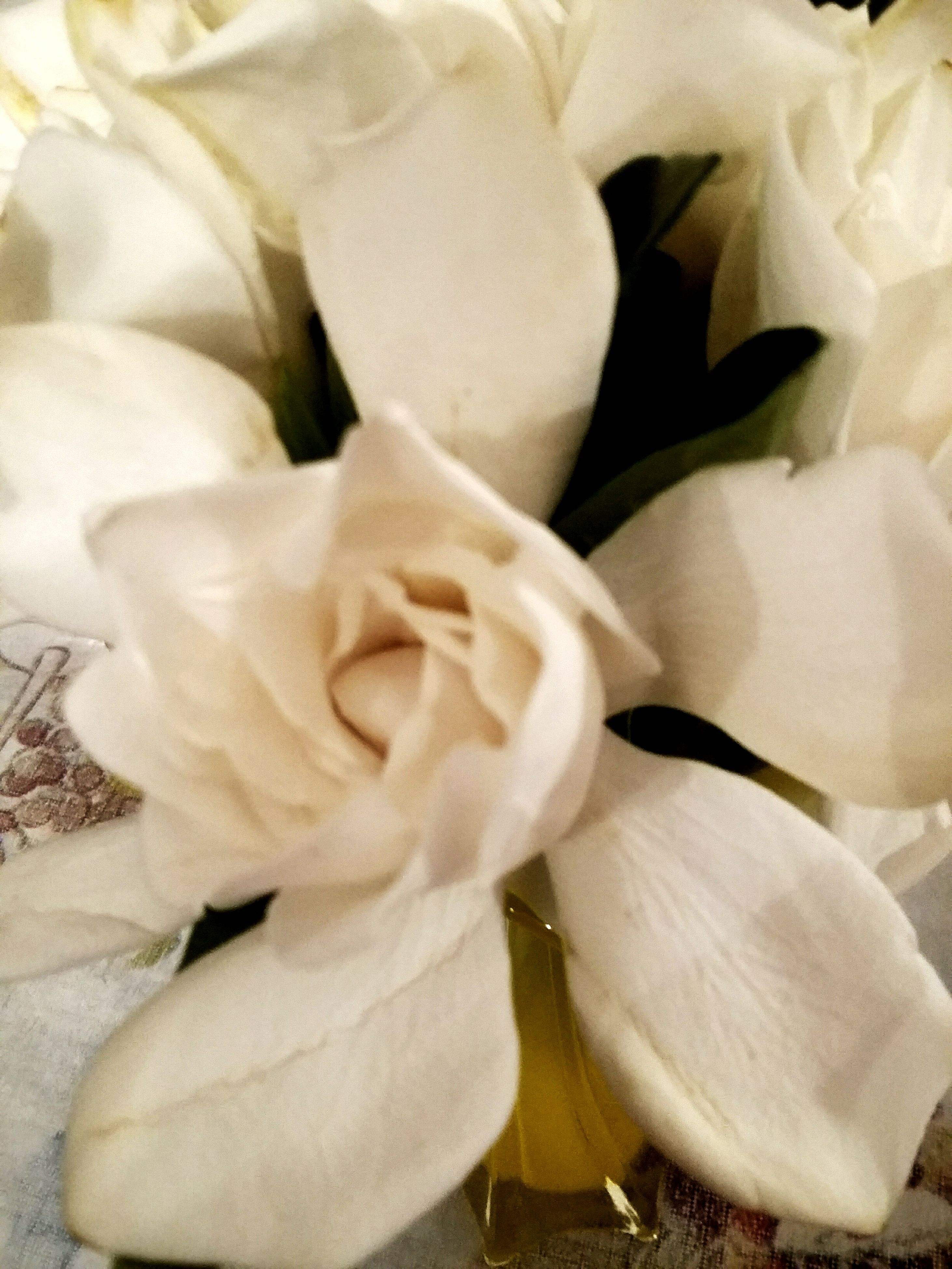 flower, petal, fragility, flower head, freshness, white color, close-up, beauty in nature, indoors, growth, high angle view, nature, white, blooming, rose - flower, softness, no people, full frame, plant, backgrounds