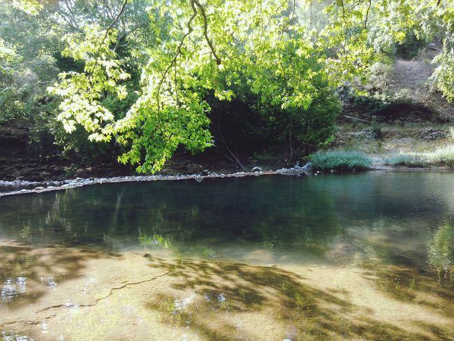 Tree Pond