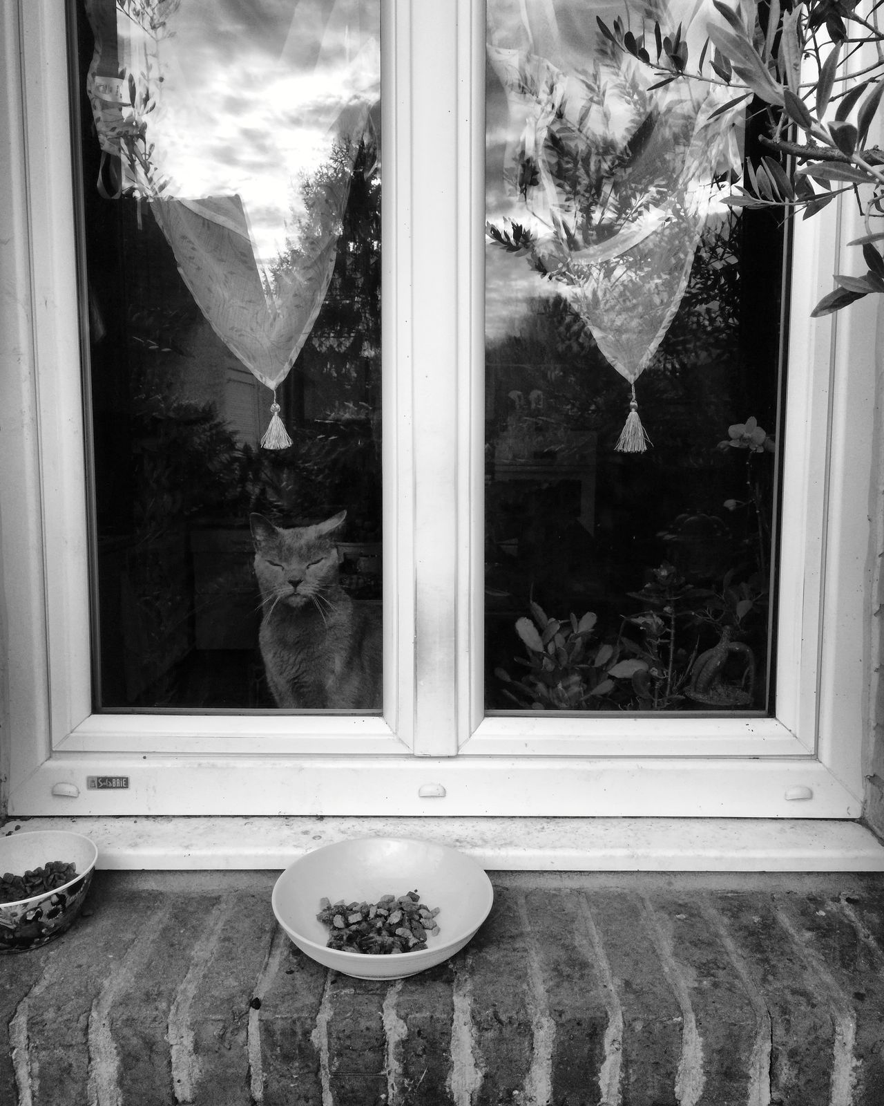 Chat à la fenêtre 🐈(verso) Window Window Sill Looking Through Window No People Black And White Domestic Animals Bnw Pets One Animal Animal Themes Domestic Cat Feline Cat Window Frame Curtain