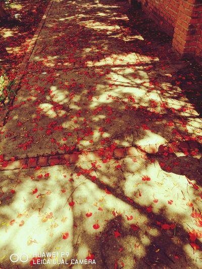 Red Autumn Panoramic Nature Beauty In Nature Springtime Las Bellas Calles De Mi Tierra Linda Santa Cruz