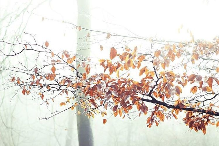 Something about the way this branch shines through the fog Autumn Nature Change Branch Beauty In Nature Plant Leaf No People Growth Outdoors Twig Tree Day Fragility Close-up Sky Freshness EyeEm Nature Lover EyeEmNewHere
