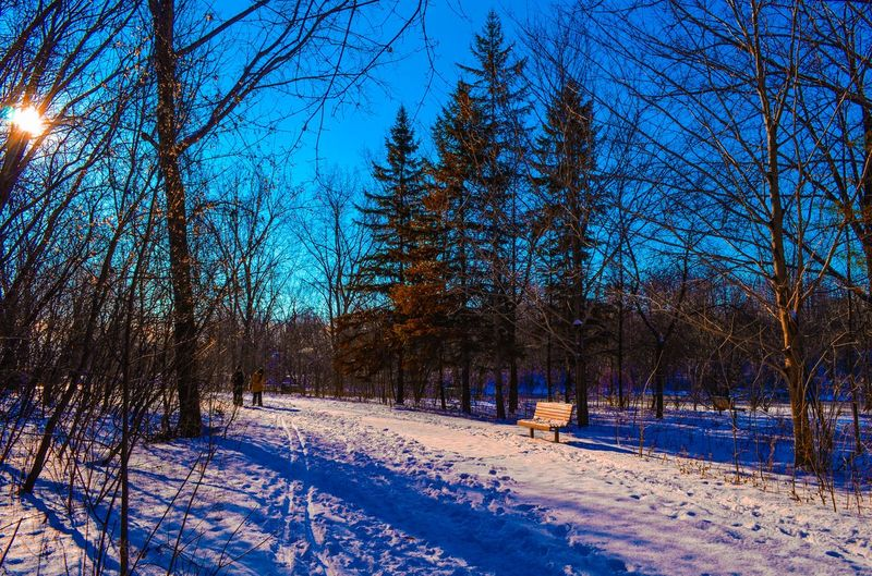 Tree Cold Temperature Winter Nature Snow Beauty In Nature Outdoors Tranquility Forest Day Sky Scenics First Eyeem Photo