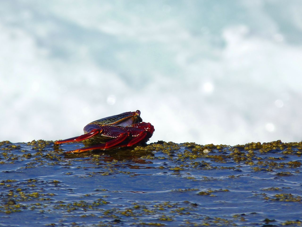 Animal Animal Themes Beach Cloud - Sky Crab Day Gran Canaria Nature Nautical Vessel No People Ocean Oceanside One Animal Outdoors Red Crab Sky Water Waves Waves, Ocean, Nature