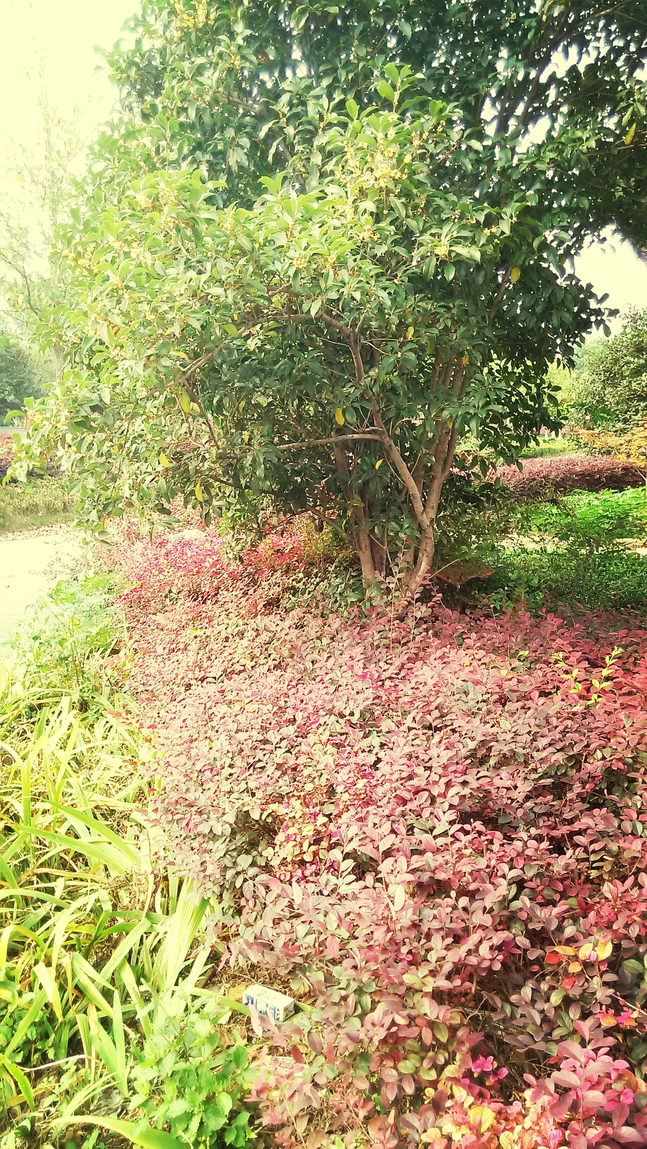 growth, plant, flower, tree, nature, green color, beauty in nature, leaf, tranquility, grass, red, freshness, growing, day, outdoors, bush, no people, park - man made space, field, lush foliage