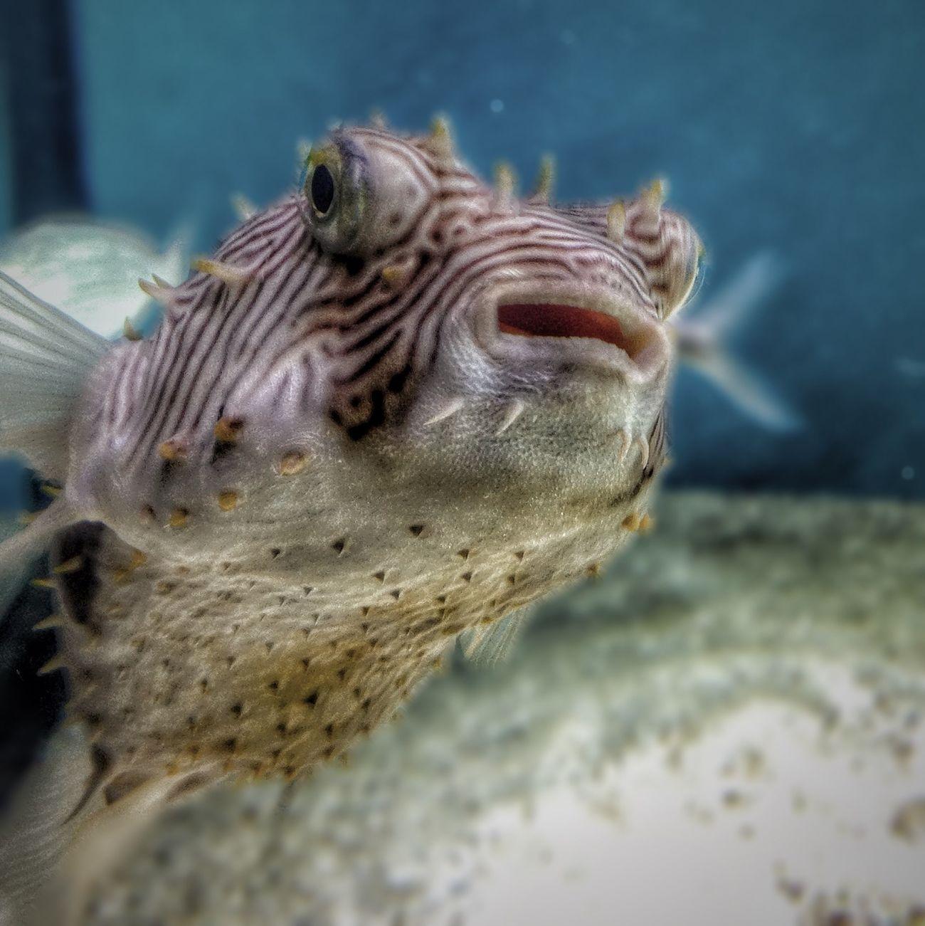 Monterey Bay Aquarium Aquarium Fish EyeEm Monterey