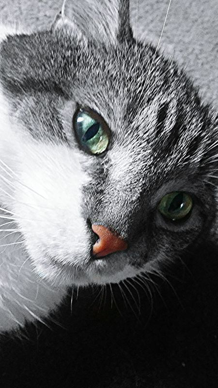 Touchofcolor Cat Whiskers Blackandwhite Black & White Greeneyedcat Catnose Animals Mostly Black And White