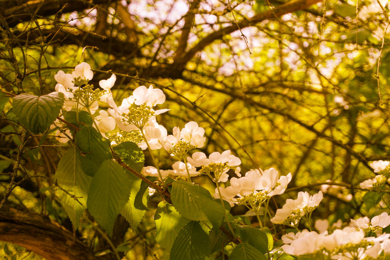 Low Angle View Of White Flowers Blooming In Park