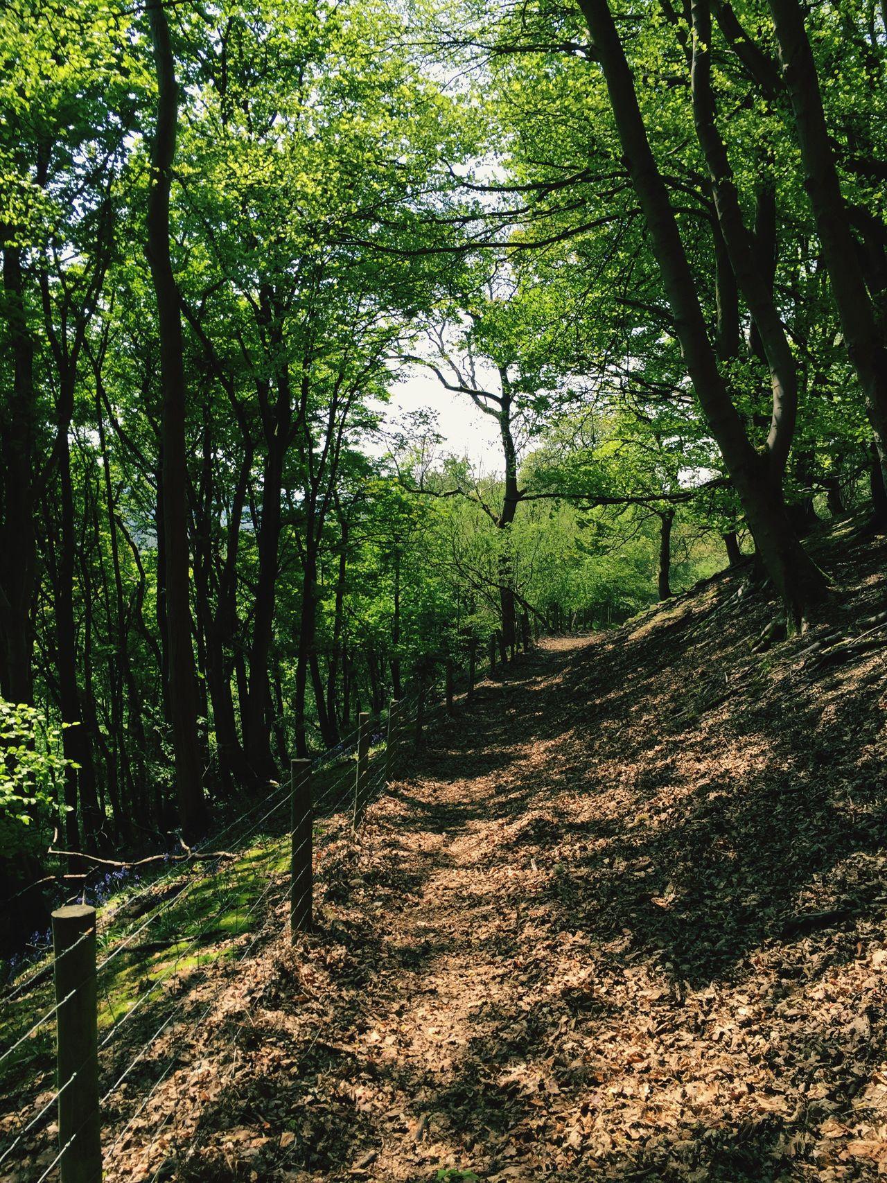 Tree Scenics Footpath Nature Dirt Road WoodLand Outdoors