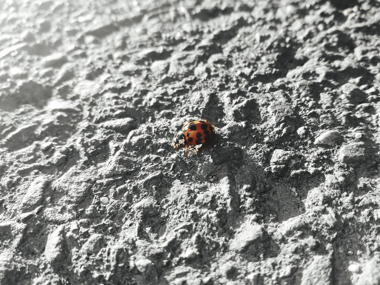 Animal Themes Nature Animals In The Wild One Animal Outdoors Day Close-up No People Beach Ladybeetle Ladybird Red Close Up