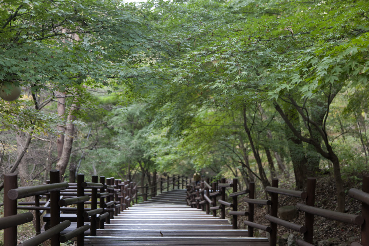autumn in Maisan Mountain, Muan, Jeonbuk, South Korea Autumn🍁🍁🍁 Beauty In Nature Branch Day Fall Forest Forest Photography Growth Landscape Maisan Mountain Nature No People Outdoors Scenics Stairway Tranquil Scene Tranquility Tranquility Tree