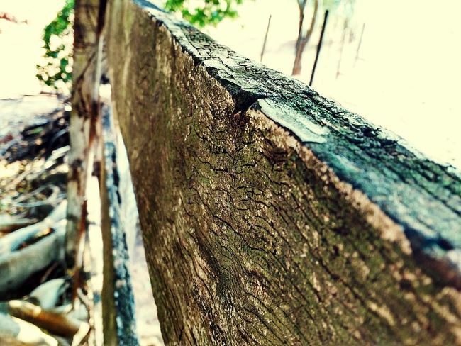 Musgo Nature Love Photography Rustic Rural Exploration Wooden Texture