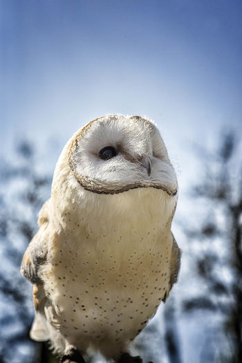 Animal Themes Animal Wildlife Animals In The Wild Barn Owls Beauty In Nature Bird Bird Of Prey Close Up Close-up Day Fly Flying Focus On Foreground Low Angle View Macro Nature No People One Animal Outdoors