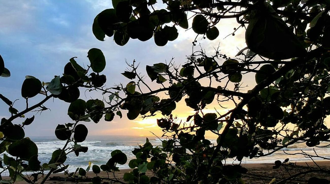 Sunrise in Costa Rica Tree Branch Sunset Nature Silhouette Sky Beauty In Nature Growth No People Outdoors Landscape Day Costa Rica Wanderlust First Eyeem Photo Globetrotter Pura Vida ✌ Travel Destinations Travel Girl Flying High EyeEmNewHere