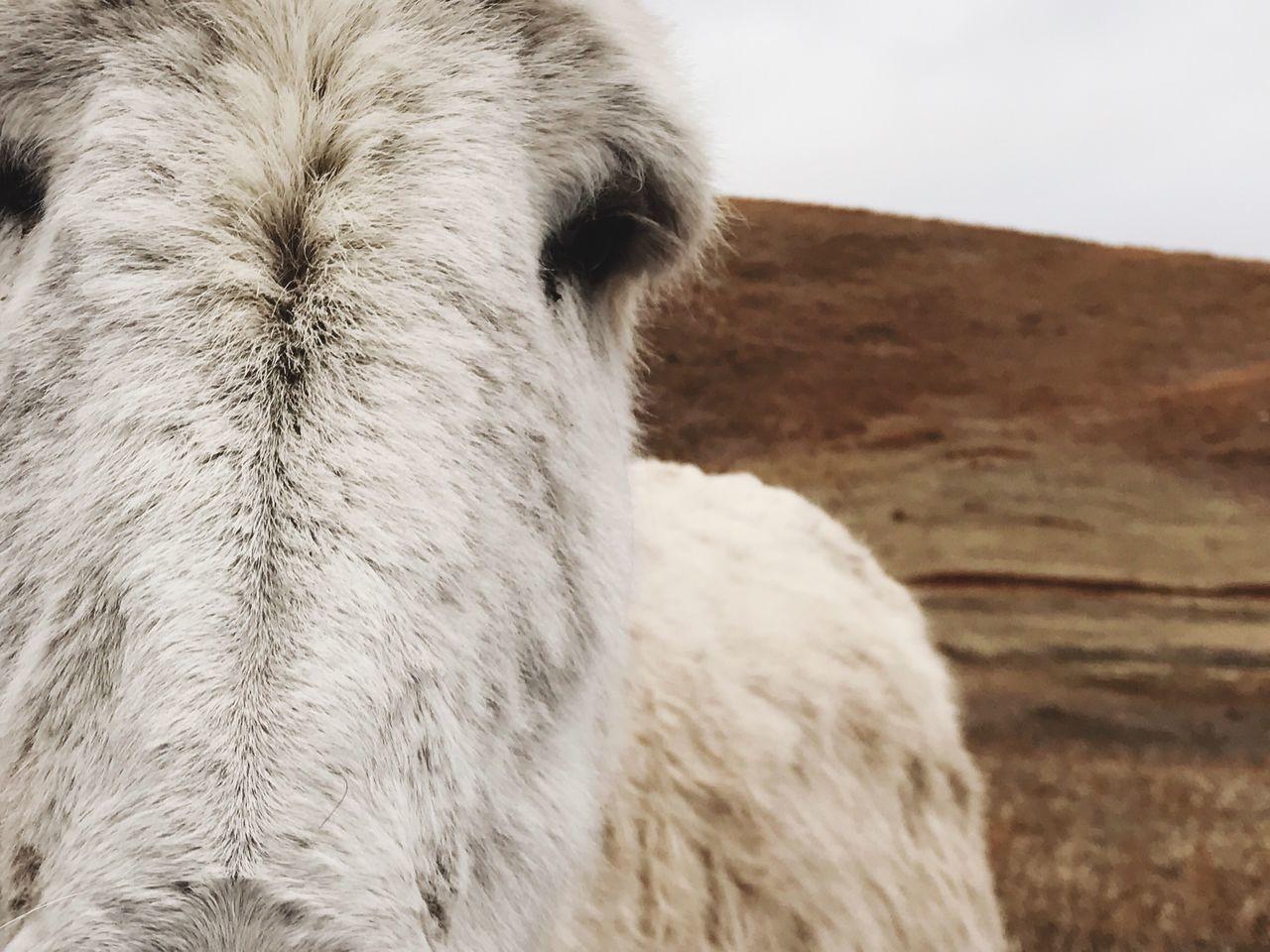 Animal Themes The Great Outdoors - 2017 EyeEm Awards The Portraitist - 2017 EyeEm Awards