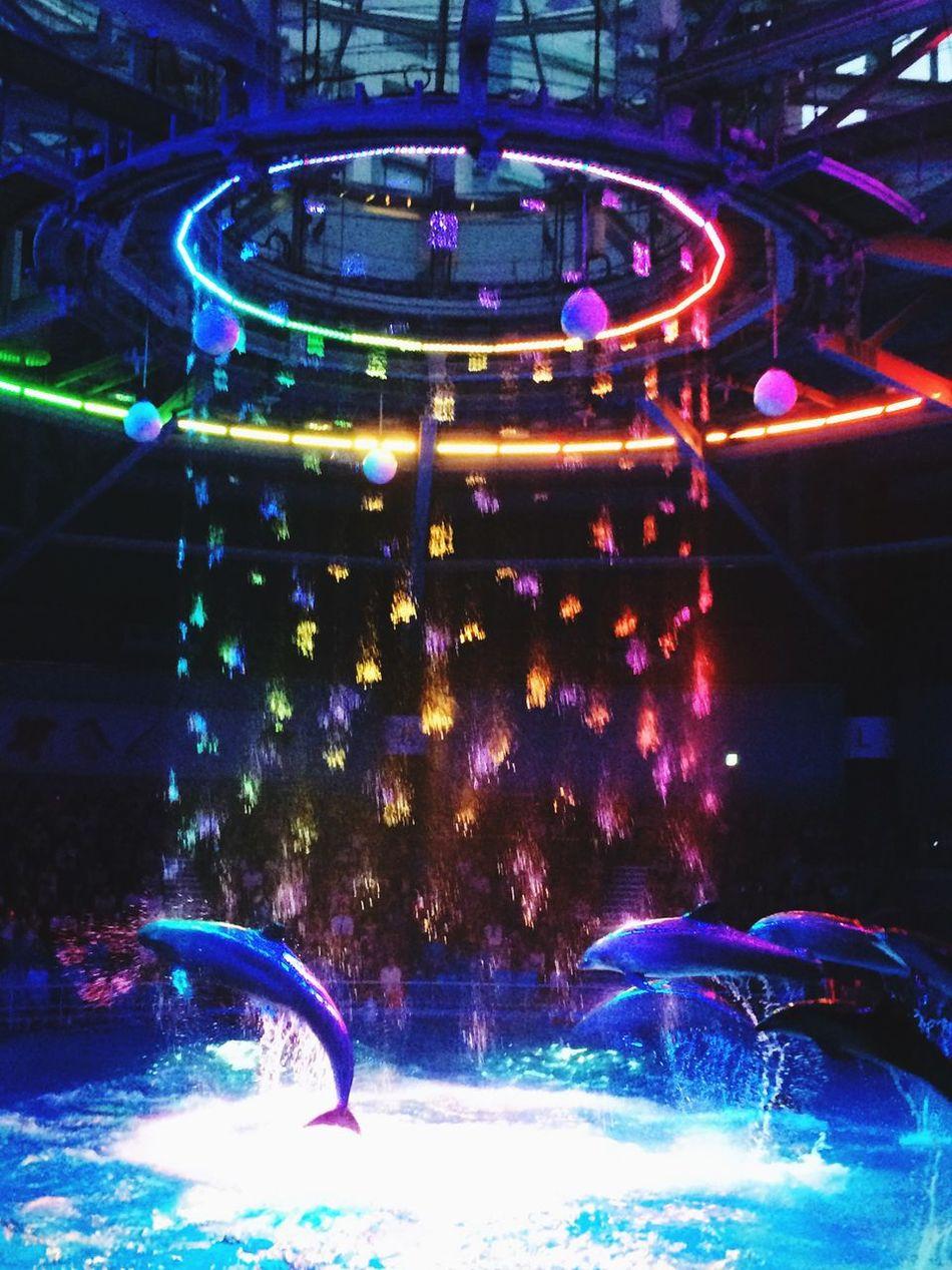リニューアルした水族館に行ってきた! イルカ達のジャンプも凄かったし、音楽や光もシンクロしてて感動した😲💓 Aquarium 水族館 イルカ イルカショー 品川