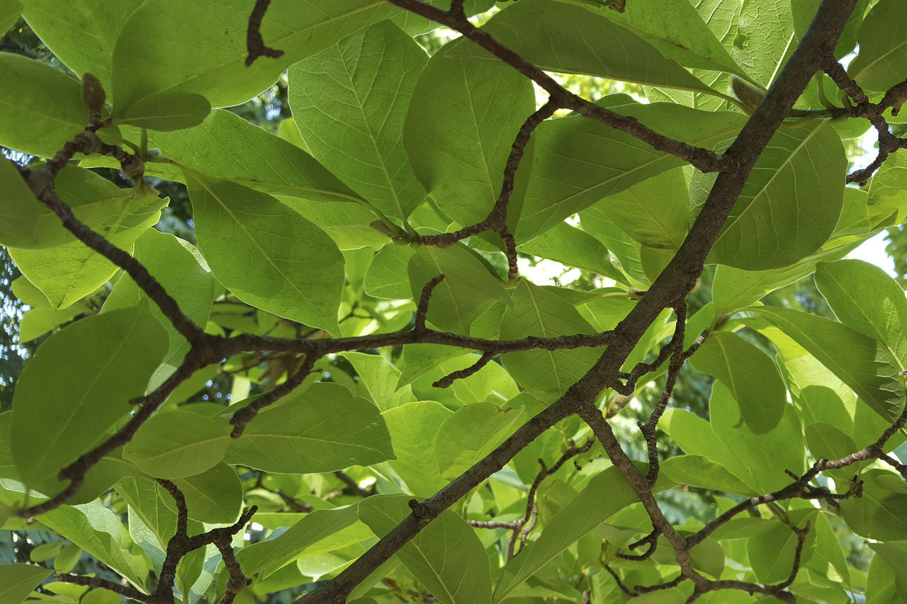 leaf, growth, nature, green color, branch, no people, tree, low angle view, day, beauty in nature, plant, outdoors, close-up, fragility, freshness