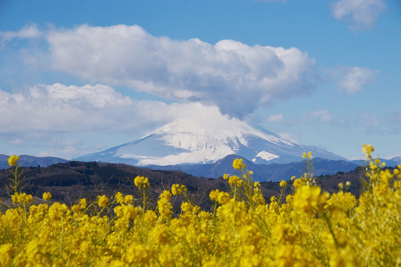 Mountain Scenics Beauty In Nature Landscape Nature Sky Outdoors Tranquil Scene Day Tranquility Flower No People EyeEm Nature Lover Eye4photography  EyeEm Best Shots Mountain Range Yellow Nature Beauty In Nature Yellow Flower Clear Sky