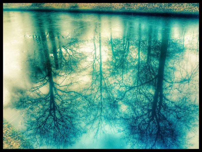 Reflections of trees in a lake. Reflections EyeEm Best Shots EyeEm Gallery EyeEm Lake EyeEm Best Shots - Nature Lake View Lakes  Reflection_collection Reflection Reflections In The Water Reflections And Water Reflections In Water Reflect Nature Nature Photography Nature_collection Trees Reflected In Water Tree Trees Water Reflections Waterreflections  Naturephotography Reflection In The Water