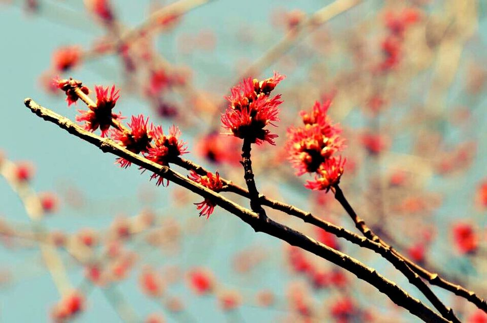 Waiting 4 Spring ~♥~ Nature_collection Nature