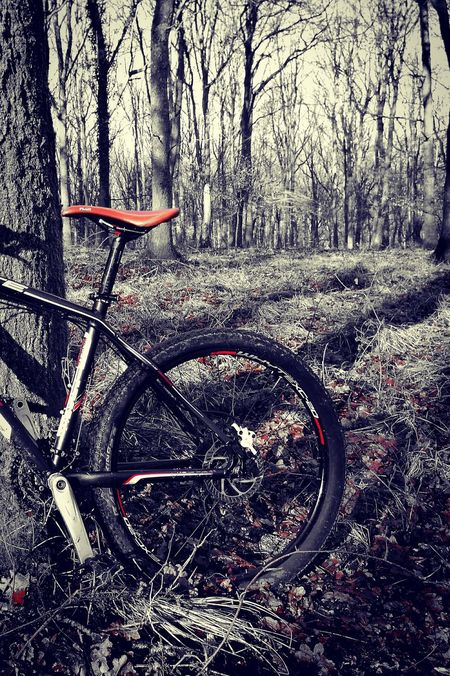 Transportation Bicycle Mode Of Transport Nature No People MTB MTB Biking Forest Of Dean Outdoors Mountain Bike Beauty In Nature Cold Morning Hardtail Whyte Mtb