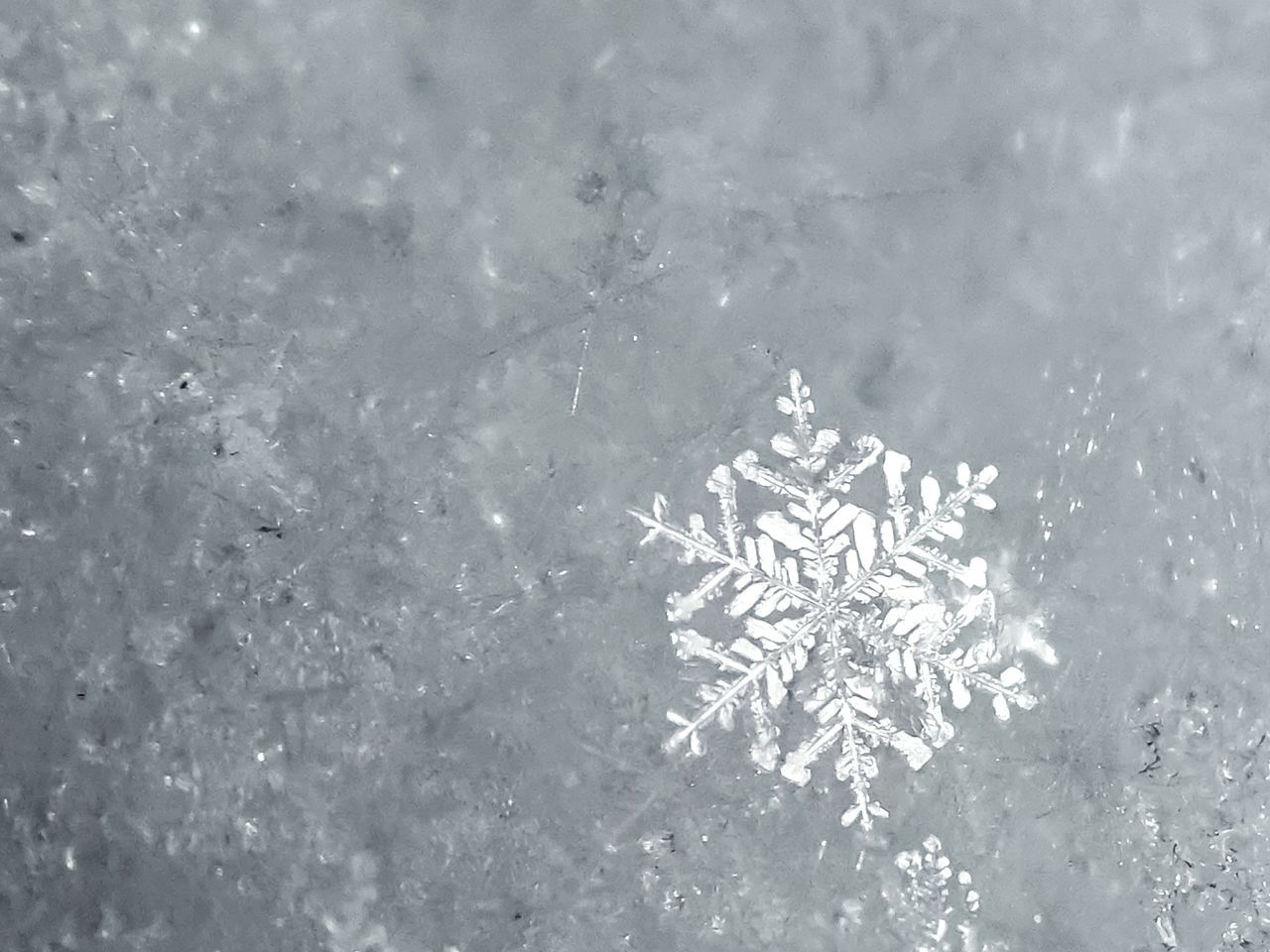 A white on white snowflake picture from the last snowstorm with photographable snowflakes during the 2016-2017 winter. Full Frame Water Nature Beauty In Nature Freshness Snow Snowflakes Macro White On White Winter Reflection Light White