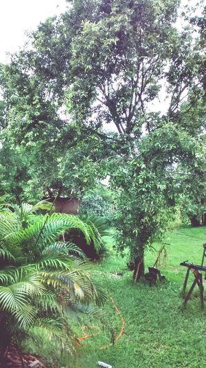 Hoje amanheceu assim em Pliscity! Dia chuvoso! Que delícia! Bom dia!