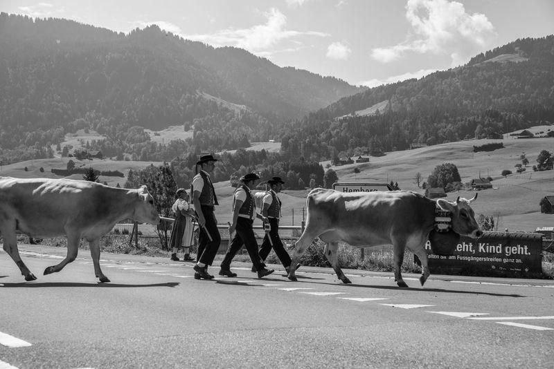 Monochrome Photography Animal Themes Mountain Walking Animal Country Road Bisang Landschaft Natur Nikon Switzerland Photographer Sbisa2life_photography Schweiz Idyllic Beauty In Nature Traditional Culture Tradition Alpabzug