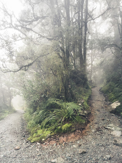Nature New Zealand Scenery Routeburn Beauty In Nature Branch Day Fog Foggy Day Forest Growth Hike Landscape Nature New Zealand No People Outdoors Plant Routeburn Track Scenics The Way Forward Tranquil Scene Tranquility Tree Tree Trunk