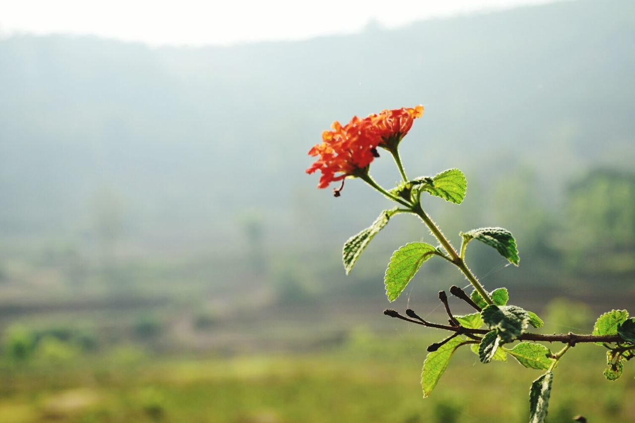 Nature Plant Red Leaf No People Outdoors Animal Wildlife Day Beauty In Nature Fog Fragility Close-up The Architect - 2017 EyeEm Awards The Great Outdoors - 2017 EyeEm Awards Live For The Story The Street Photographer The Street Photographer - 2017 EyeEm Awards Freshness Sky