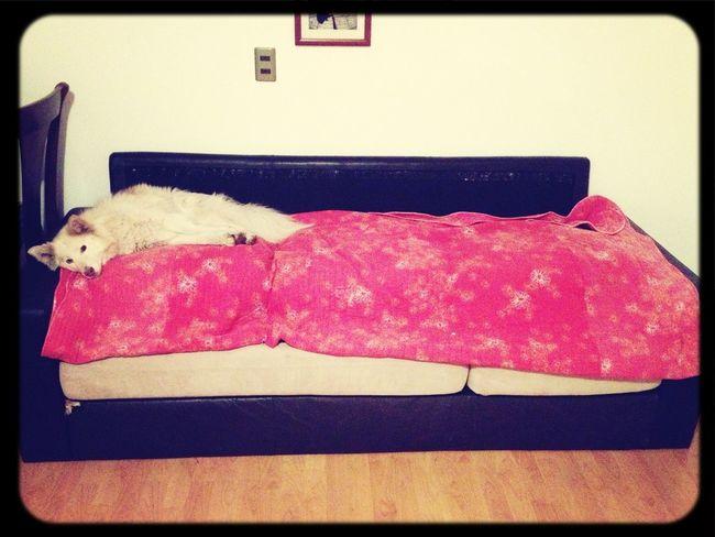 Dueña y Señora del sofa, mientras los perros duermen en el piso xD Los Niños Durmiendo...