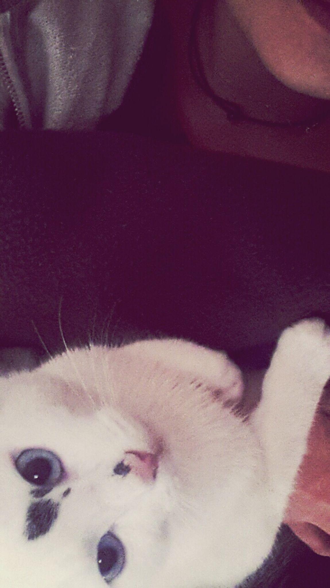 Mon chat es plus photogénique que moi . 😒 Catstar #cat #catnap #catoftheday #catpic #catlovers #catsconnect #catinstagram #catsofinstagram #gato #gatinhos #gatto #garfield #petstagram #premierpet #photooftheday #petsofinstagram #picoftheday #petlovers #instabicho #ilovecats #ilovemypet #issovici Lyon7 Calypso Adorable Cat  Love ❤