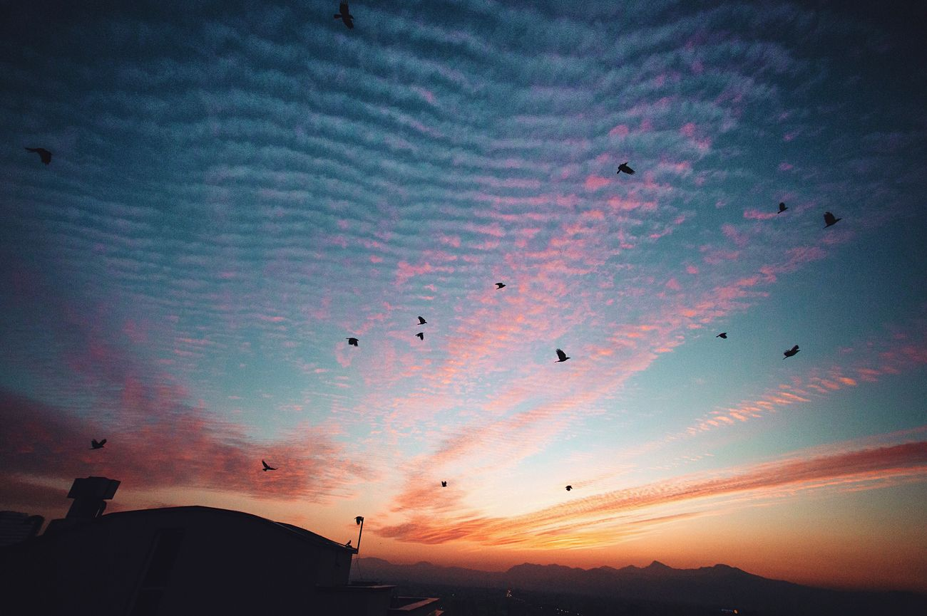 Flying Sky Large Group Of Animals Bird Sunset Animal Themes Silhouette Animals In The Wild Flock Of Birds Low Angle View Cloud - Sky No People Migrating Nature Outdoors Beauty In Nature Architecture Day Adapted To The City