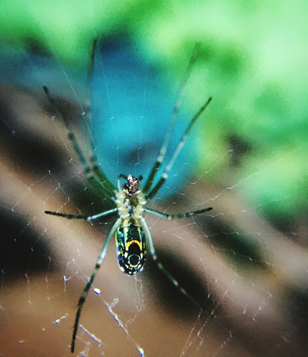 One Animal Animal Themes Spider Animals In The Wild Insect Spider Web Focus On Foreground Close-up Nature Animal Wildlife Web No People Day Outdoors Beauty In Nature Fragility Animal Leg Jumping Spider