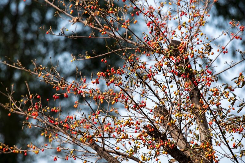 Fruit little Nature Tree 秋