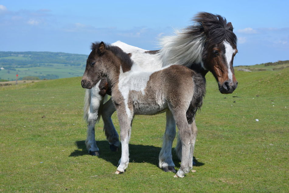 Beautiful stock photos of pony,  Animal Themes,  Beauty In Nature,  Day,  Domestic Animals
